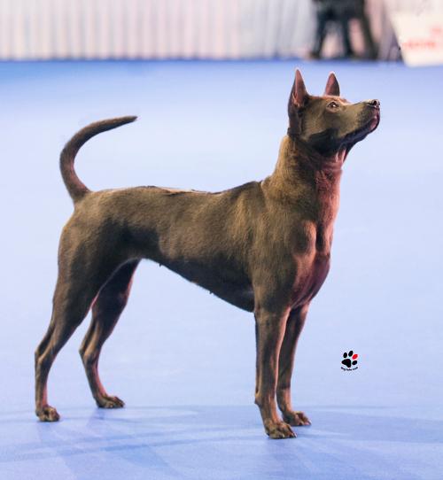 Bester Junghund