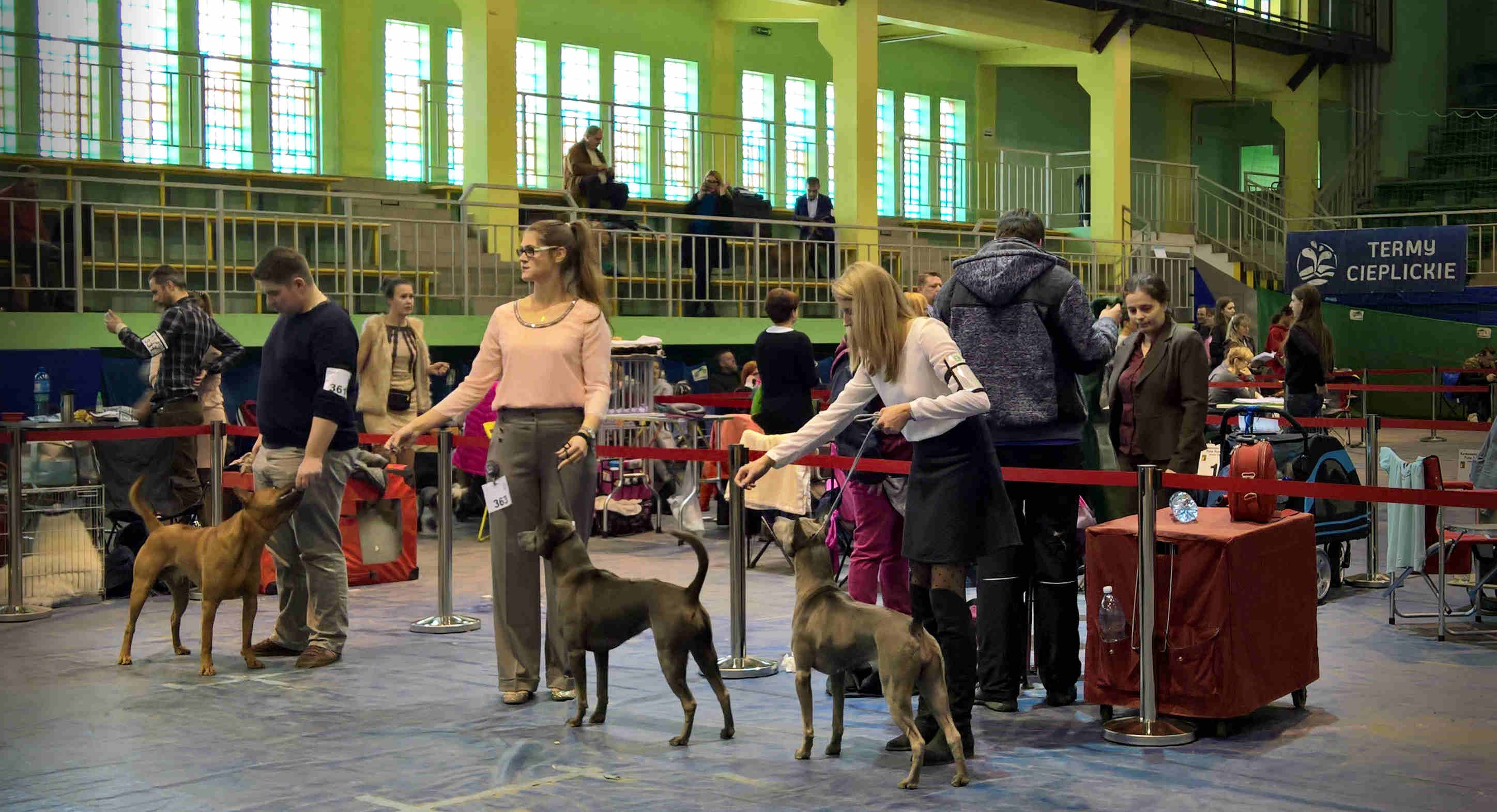 10.03.2018 National Dog Show Jelenia Gora (PL)