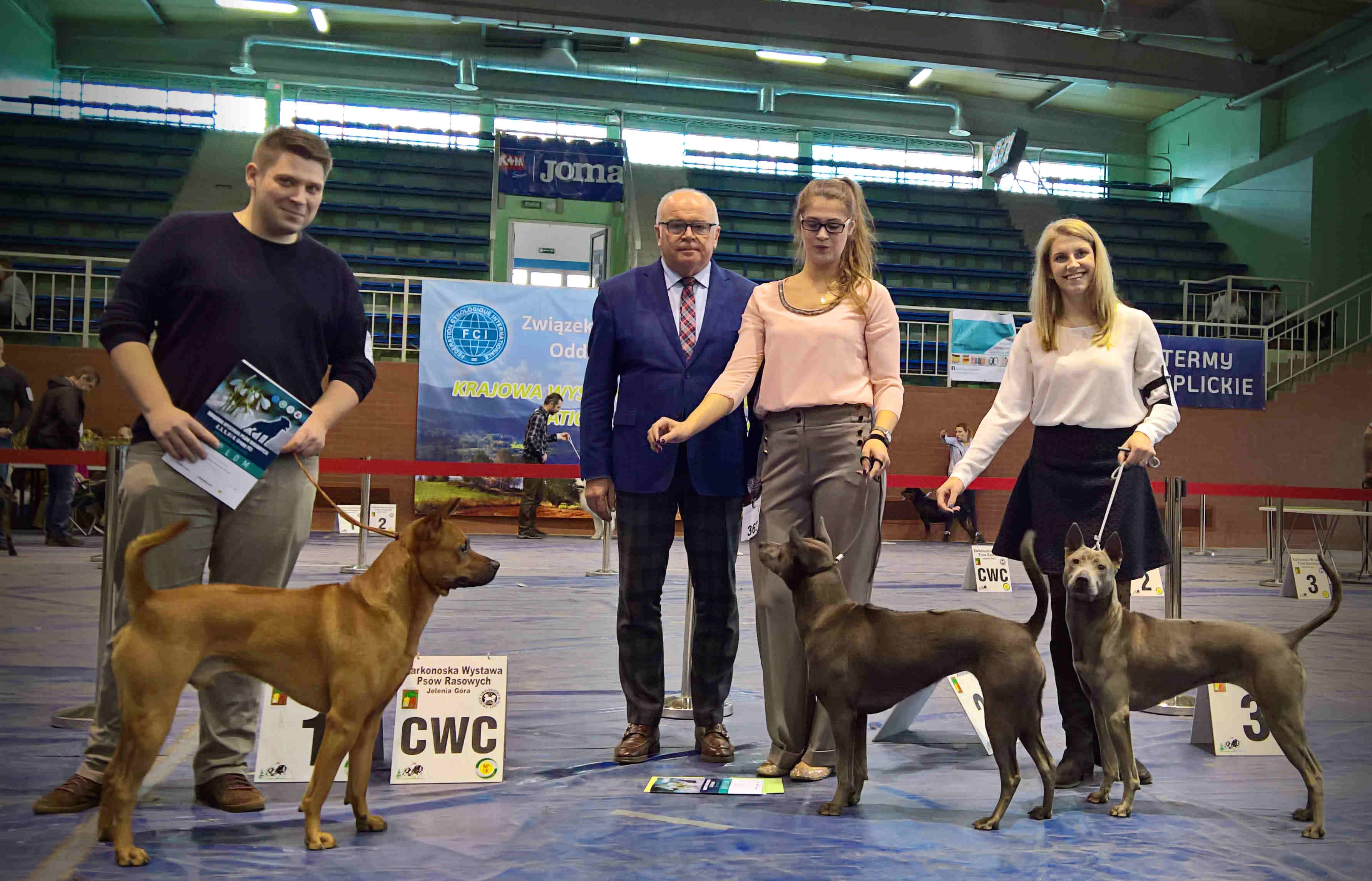 National Dog Show Jelenia Gora Thai-Ridgeback Dog