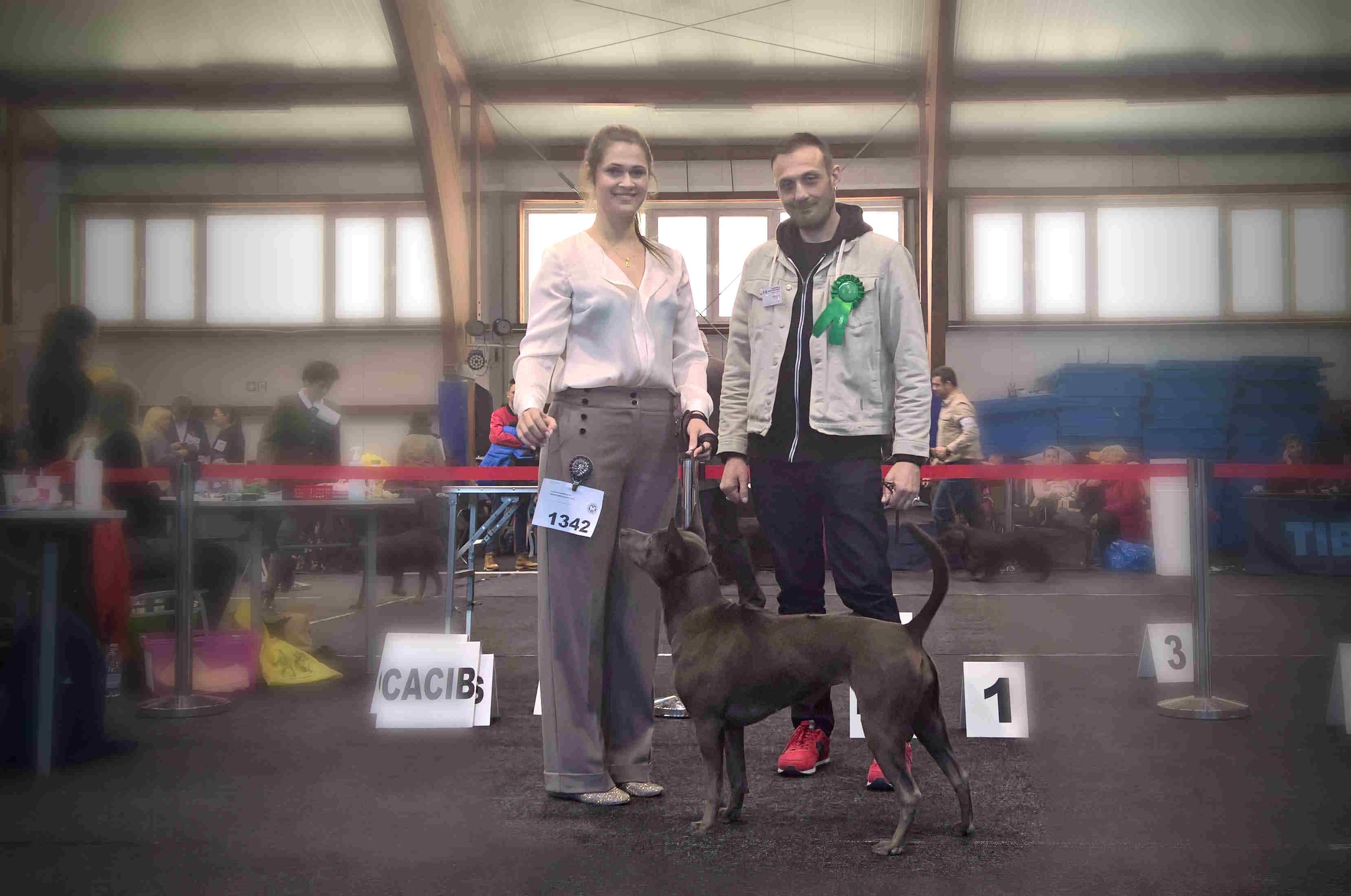International Dog Show Zielona Góra