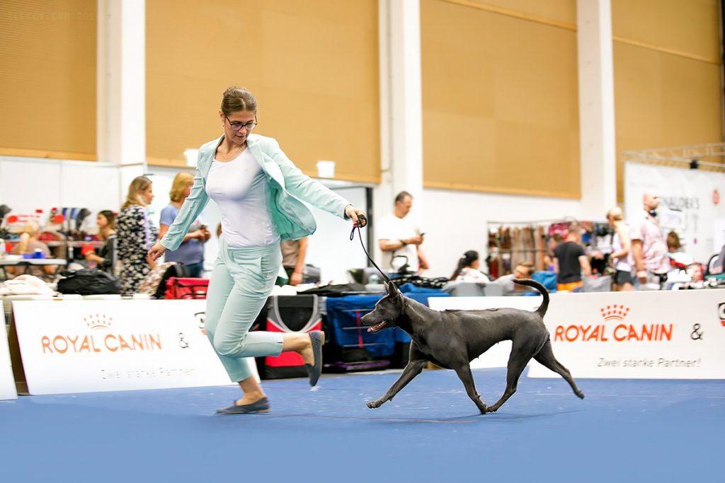 European Dog Show